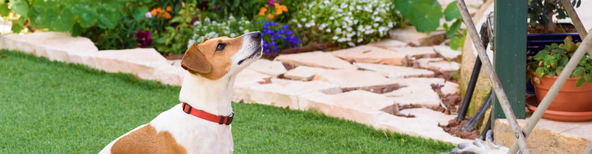 BBQ Food & Pet Safety Tips